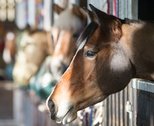 A row of horses in stables at a BHS Approved Centre